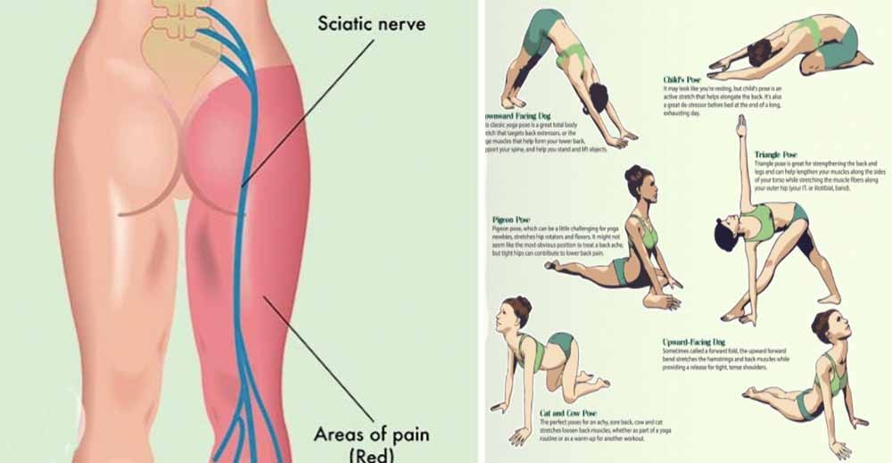 The lower back, or the lumbar region, can be an area that often gets ...