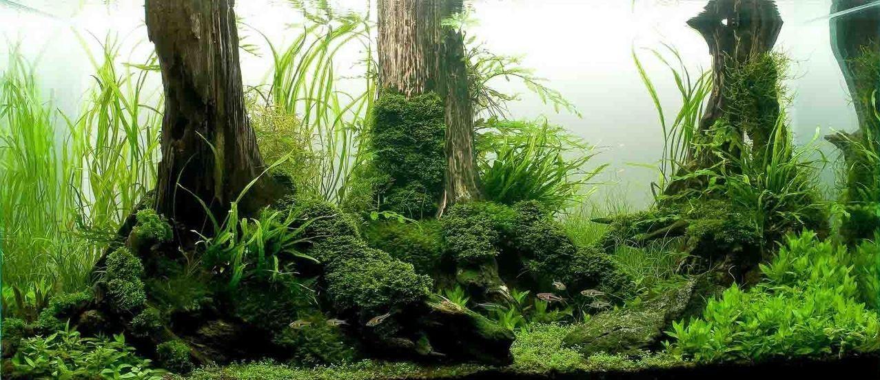 Amazing aquascapes Aquarium Pinterest Aquariums Underwater