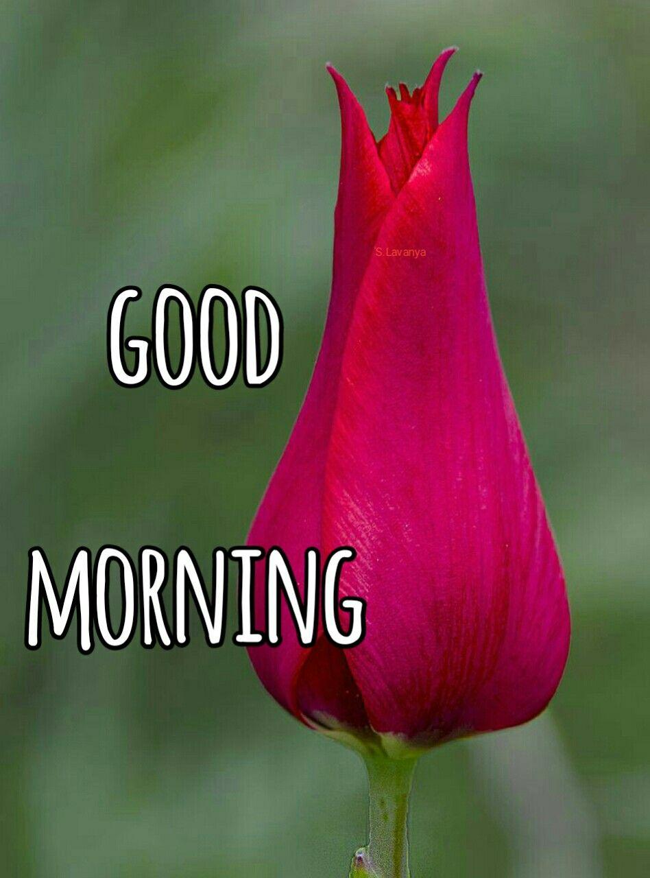 Good morning S Lavanya   Good Morning   Morning qoutes, Good morning