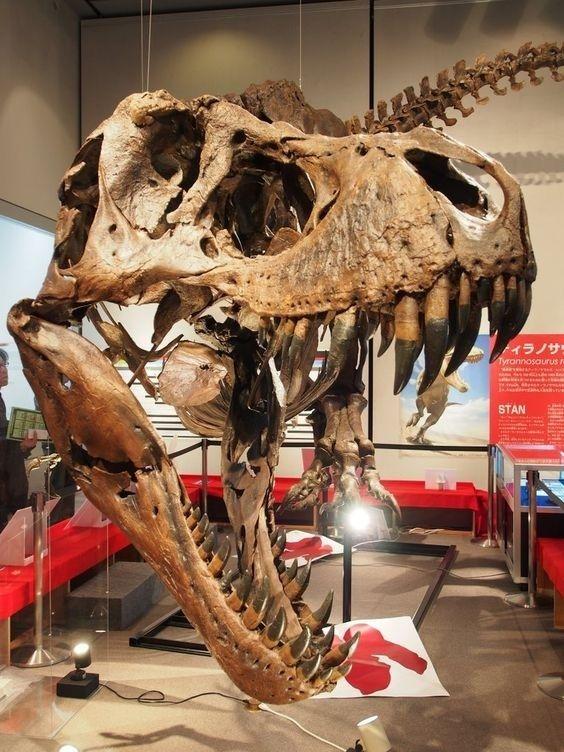 Which is better, T. rex or Spinosaurus? - Quora #tyrannosaurusrex