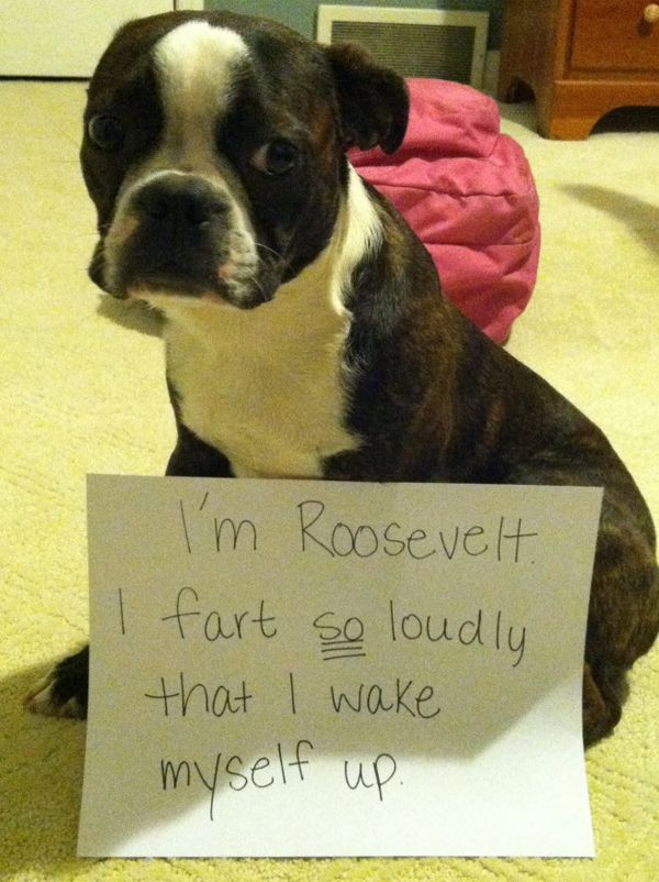 What A Way To Greet The Day Animal Shaming Very Funny Funny