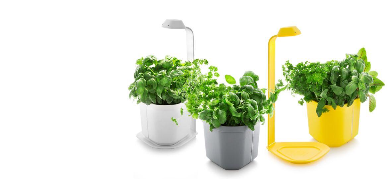 Delightful Genie Kitchen Garden | Tregren. Modern Indoor Pots And Planters. These Are  Great On · Herb Garden DesignHerbs ...
