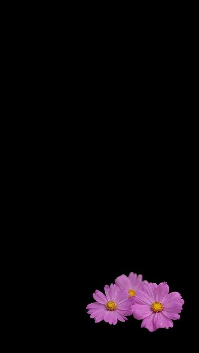 Blumen schwarzer hintergrund