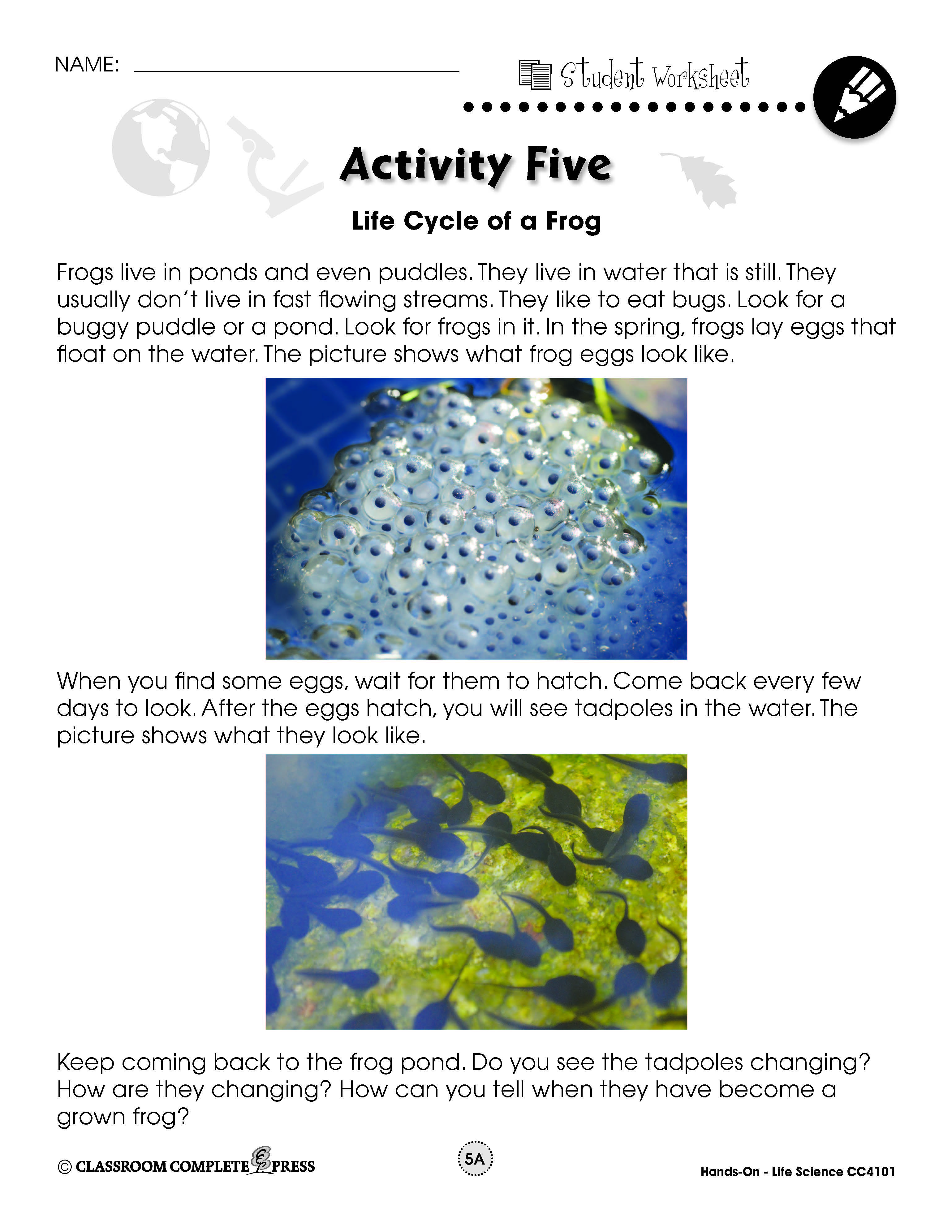 Observe The Life Cycle Of A Frog In This Free Experiment