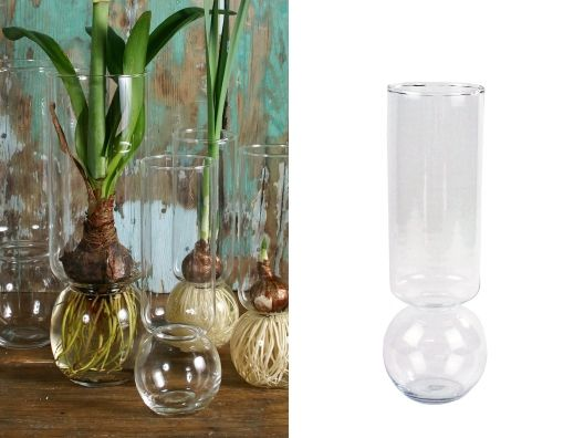 amazing!! - Bulb Vases - no dirt required!