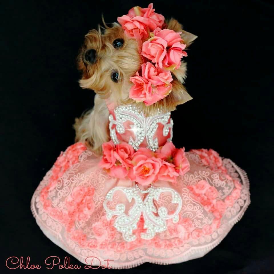 Pin de Catalina Cevallos en mascotas | Pinterest | Ropa para perros ...