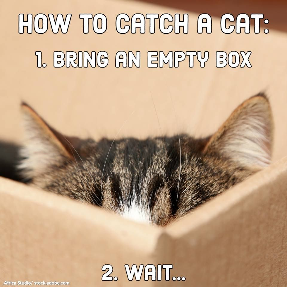 How To Catch A Cat Cats Cats And Kittens Animal Antics