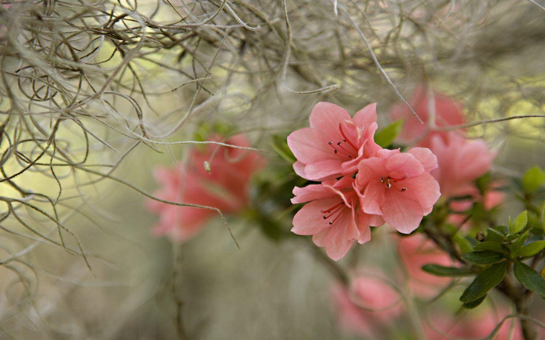 Spring Scenery Wallpaper For Desktop Spring Scenery Scenery Wallpaper Spring Wallpaper