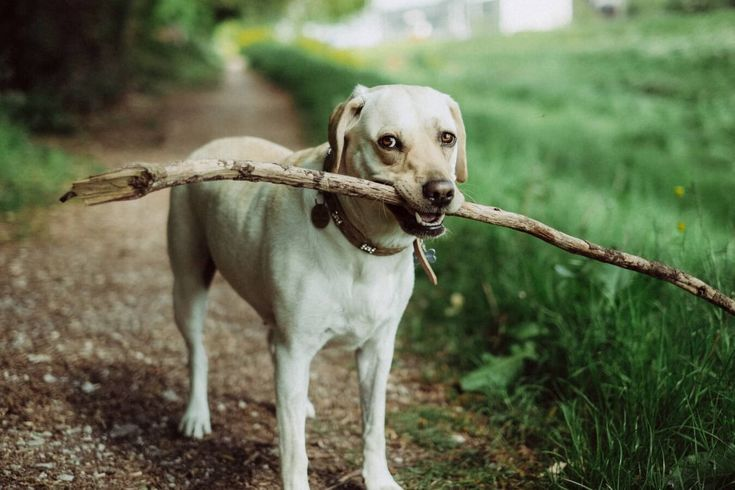 How Do Dogs Get Worms? Aggressive dog, Dog walking