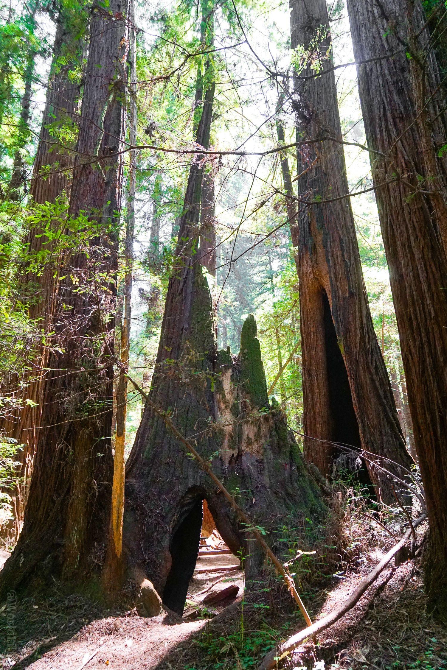 A California Redwoods Hike Near Santa Cruz, Ideal for Kids - Around on