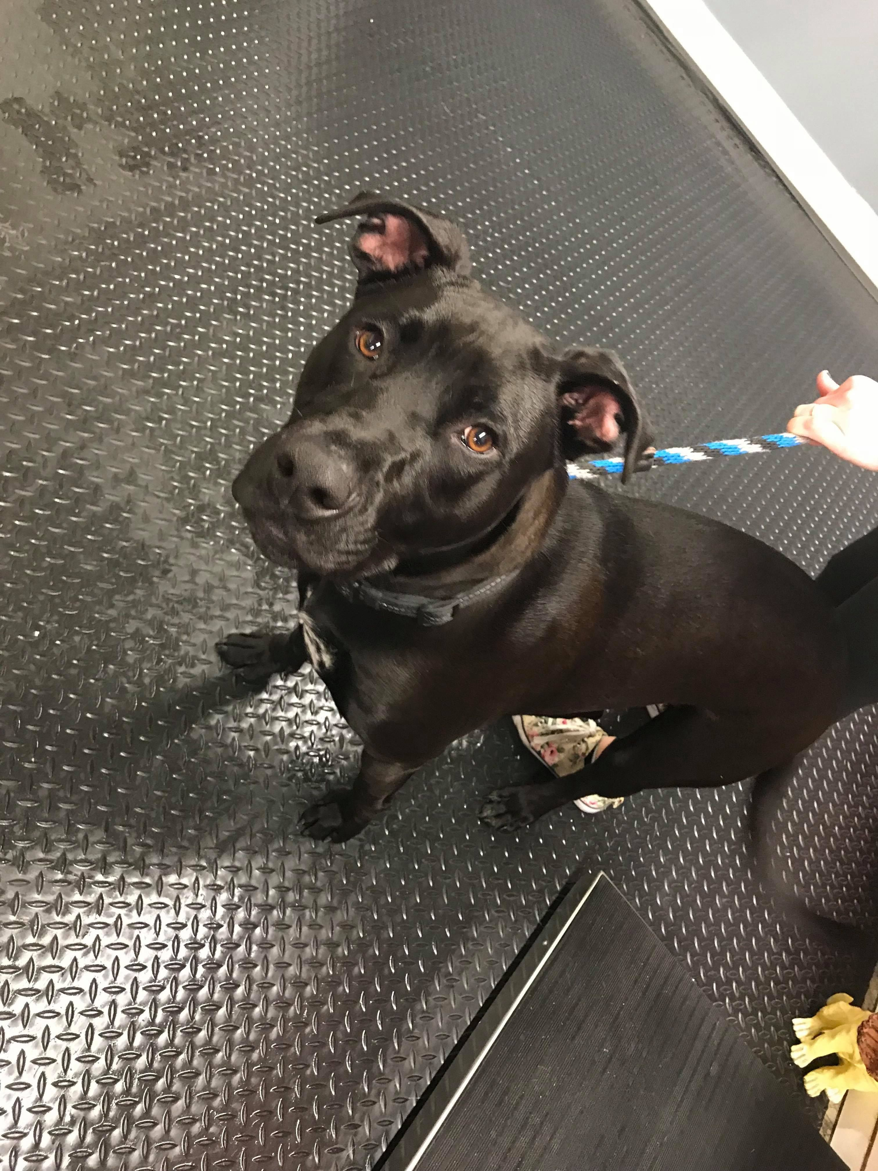 Adopt Milo on (With images) Pets, Terrier mix dogs