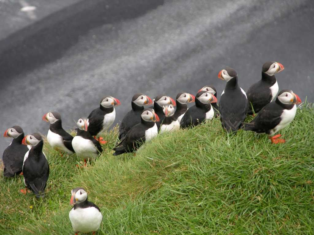 Farne Islands Best Time See Wildlife