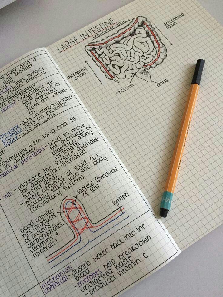 bellaxlovee foto da farmi pinterest caderno escola e bellaxlovee foto da farmi pinterest caderno escola e organizao ccuart Gallery