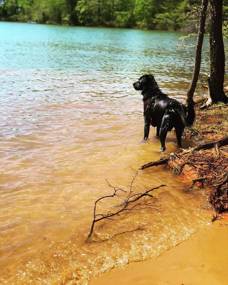 Puppy rescue charlotte nc