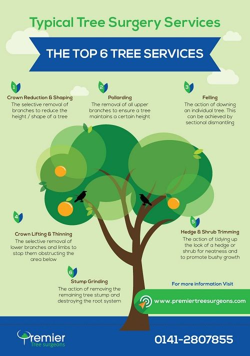 tree surgery near me on Learn About The 6 Most Popular Tree Services Offered By Tree Surgeons This Infographic Was Created By Premier Tree Service Tree Surgeons Tree Removal Service