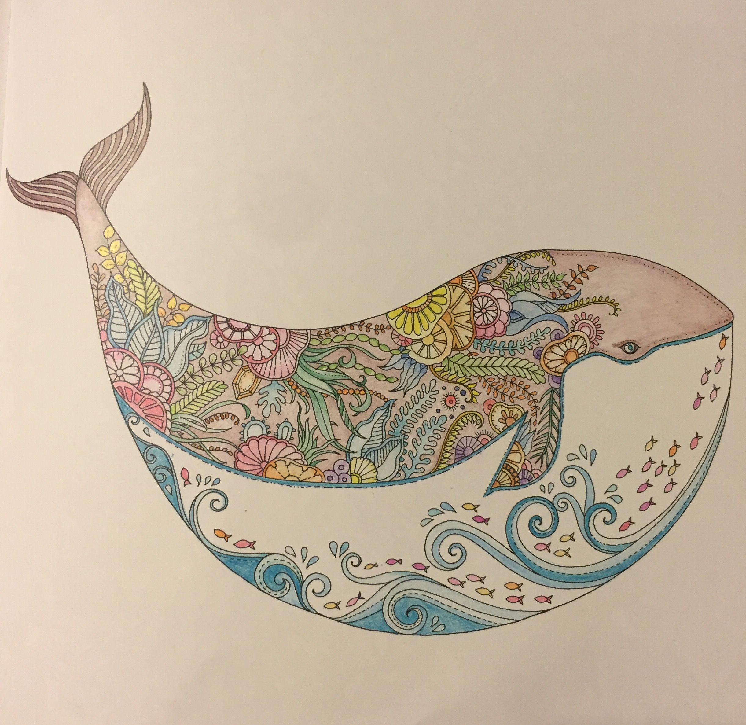 a whale of a time my colouring gallery johanna basford u0027s lost