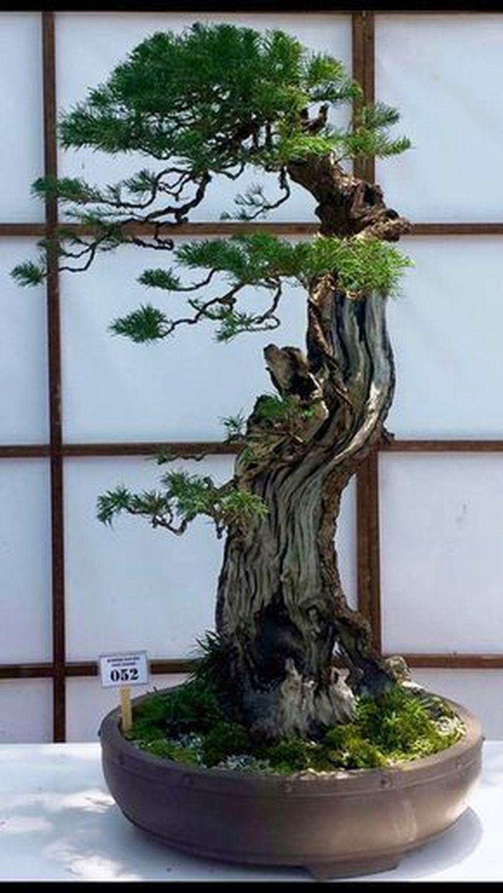 30+ Favorite Bonsai Tree Ideas For Your Garden Indoor