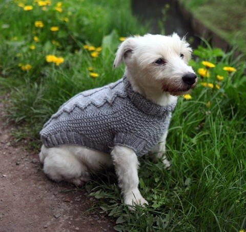 Cable Knit Dog Sweater Pattern Free Knitting Pinterest Dog