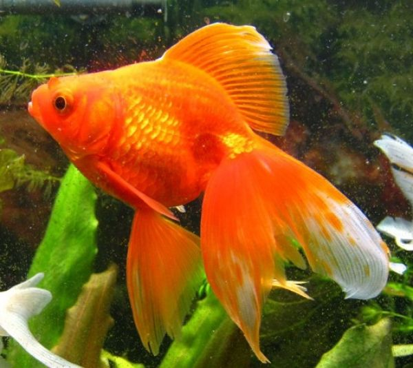 аквариумные рыбки фото и название-картинки: 20 тыс ...