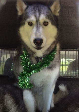 Daddy She S Making Me Wear Tinsel Merry Christmas From Sixteen