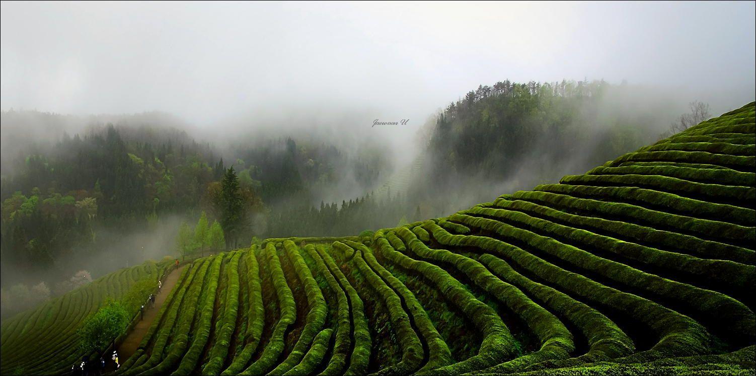 Fotografía Misty green field por Jaewoon U en 500px