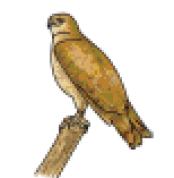رسم صقر للأطفال المبتدئين خطوة بخطوة بالصور Animals Bird Owl