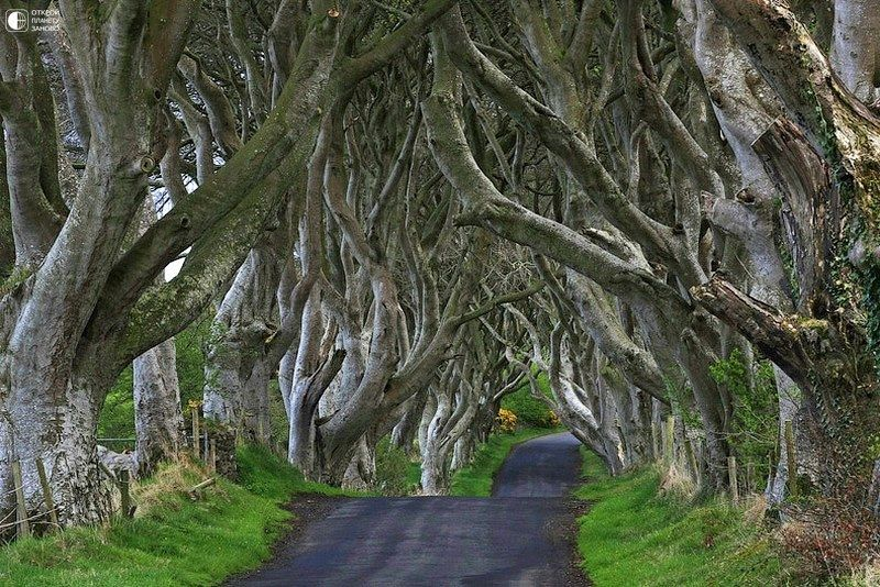 видел фото времена года ирландия лепестки нужно