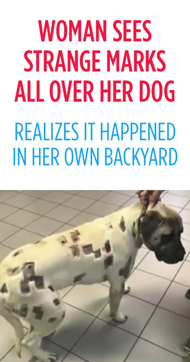 Woman Sees Strange Marks All Over Her Dog Realizes It Happened
