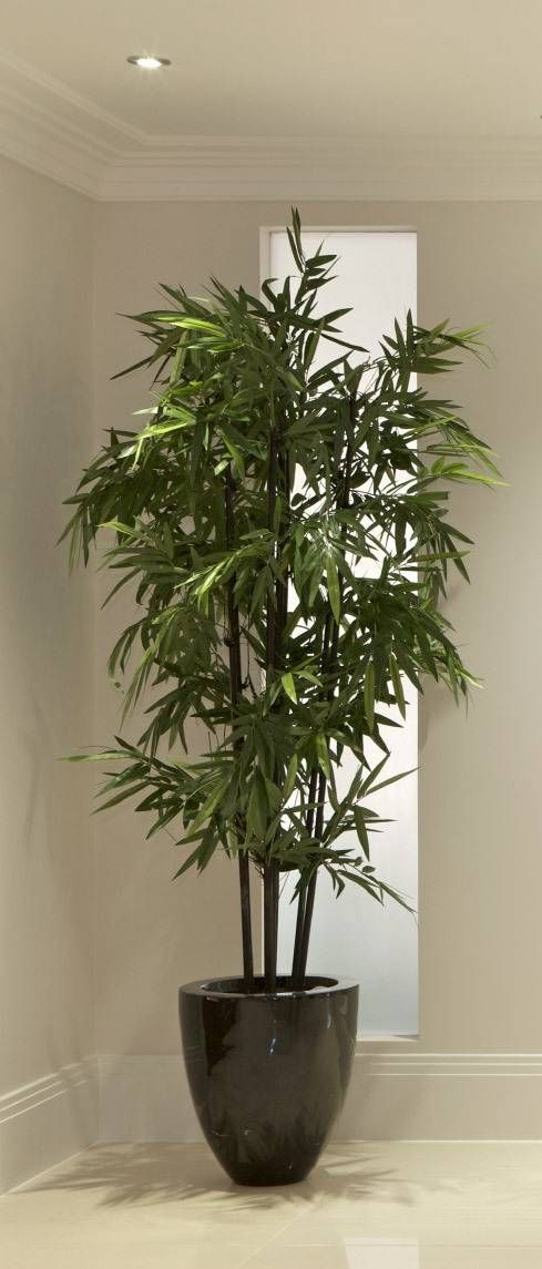 Most People Already Know That Bamboo Is A Beautiful Exotic Plant Comes In Variety Of Colors To Brighten Up The Landscape