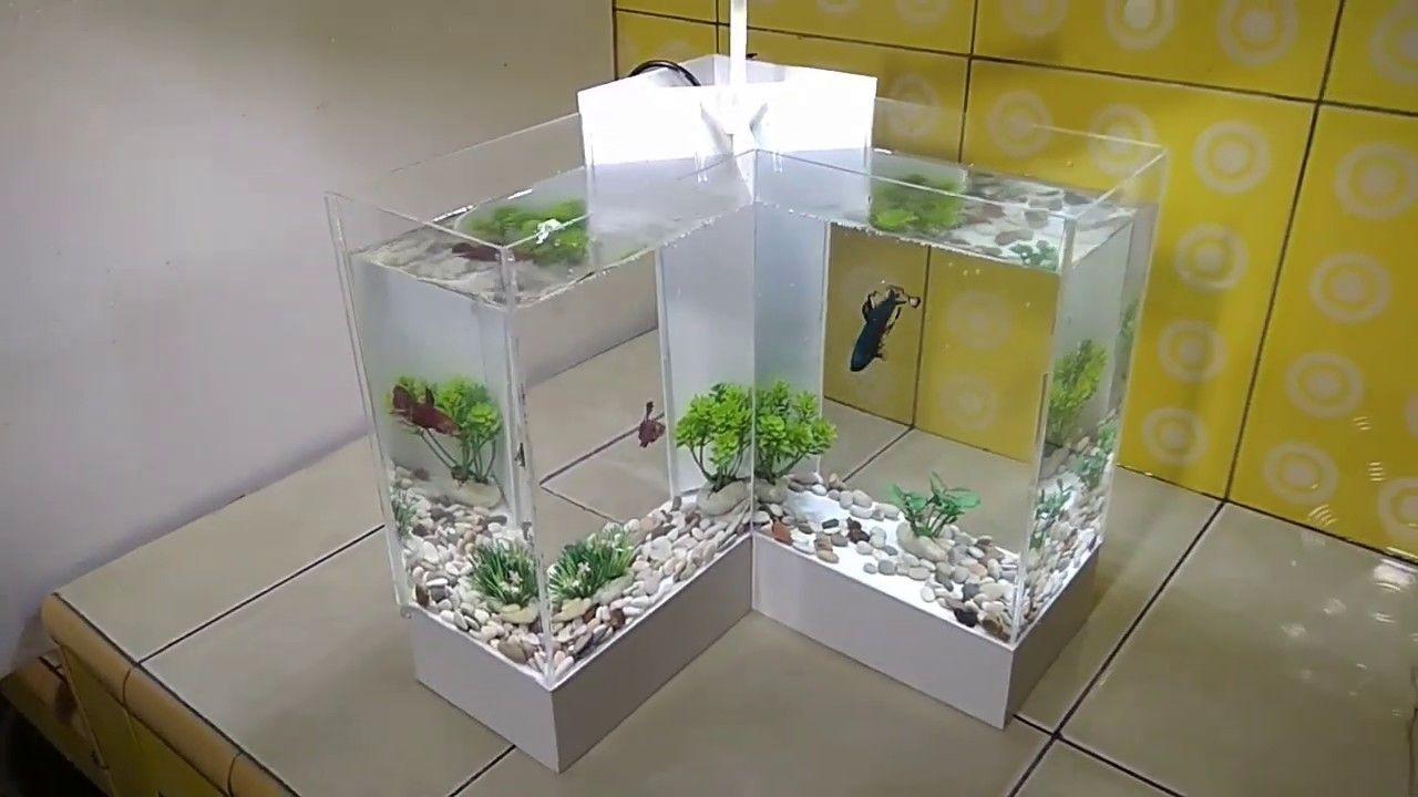 Aquariums Membuat Aquarium Ikan Cupang Model L Cupang Aquarium Aquascape Aquarium