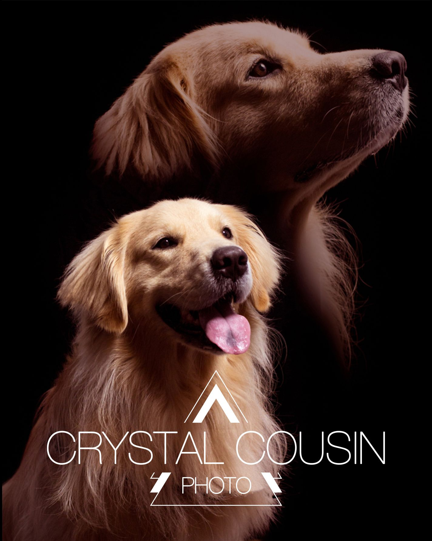 Old School 80 S Style Dog Portrait Photography By Crystal Cousin