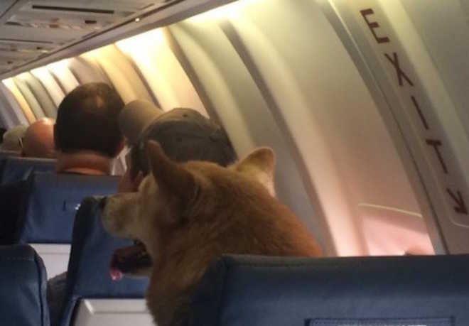 Passageiro tira foto de cão em avião e imagem repercute na internet