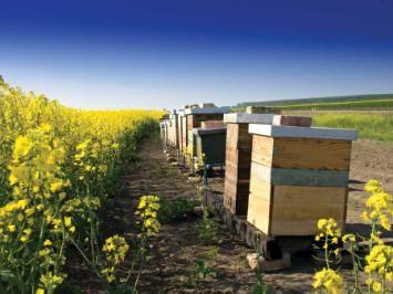 Niche Markets and Small Farming