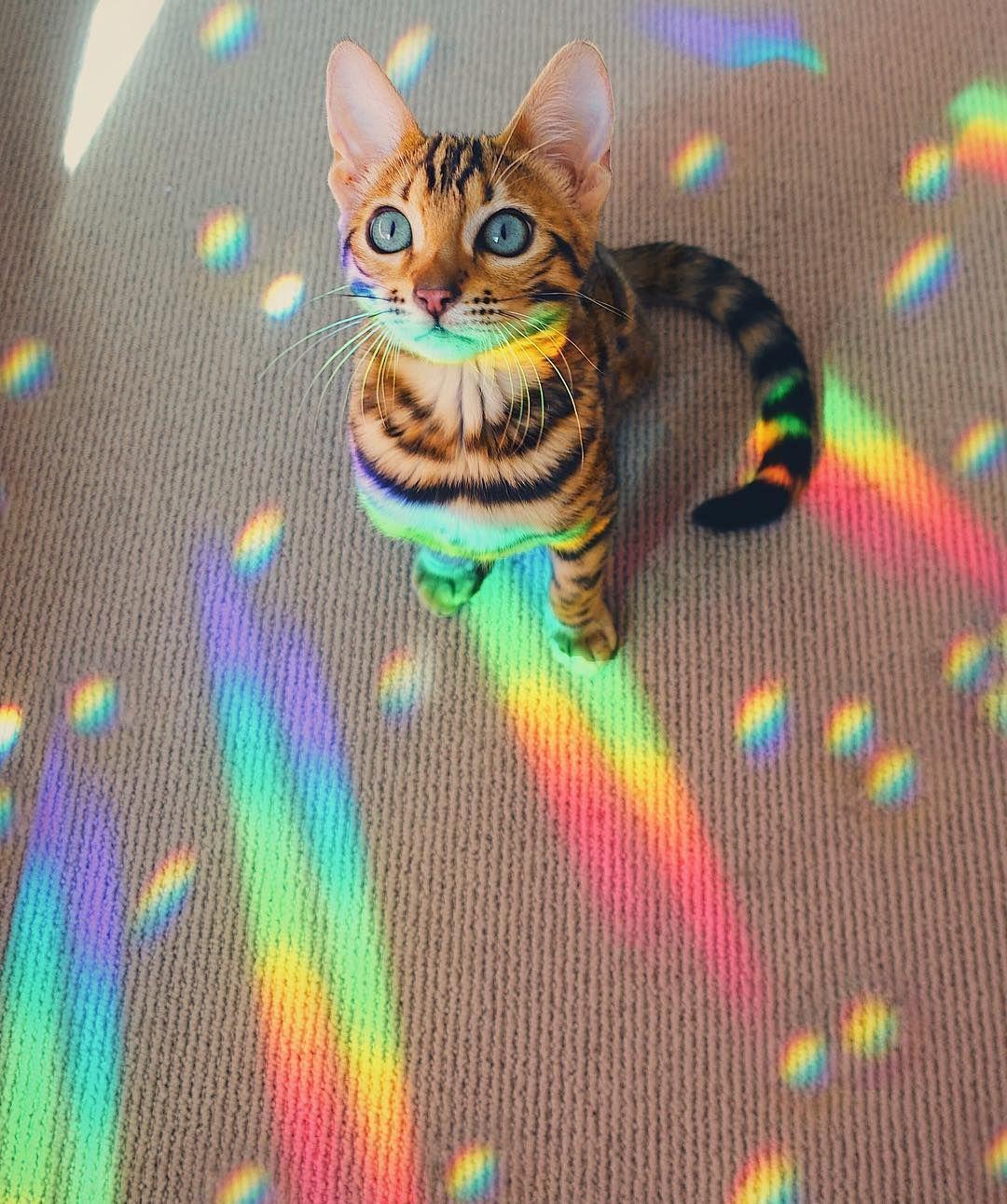 Bengal cat Bengal kitten rainbow iridescent holographic universe
