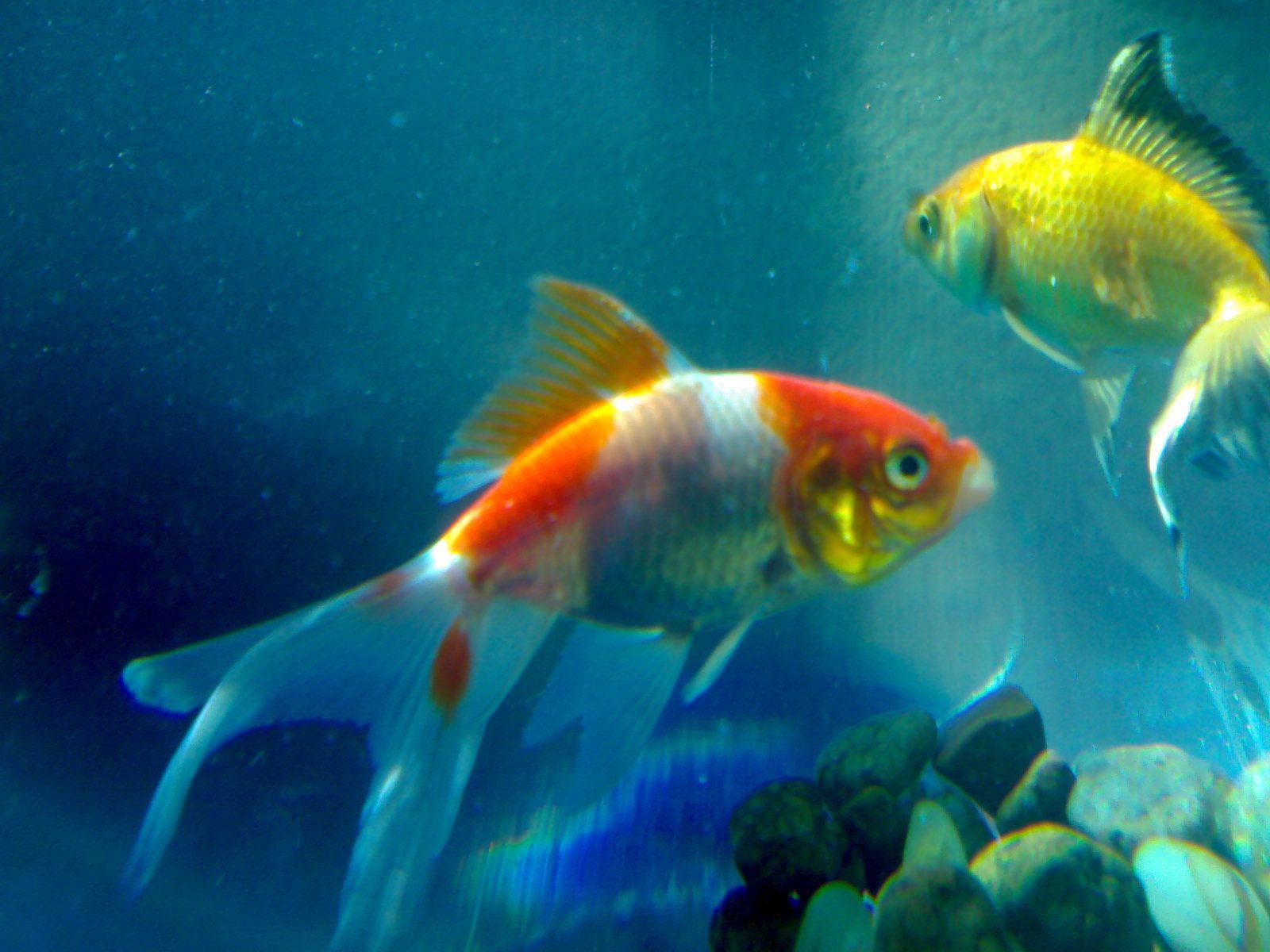Pin By Santuccio Album On Underwater Life Beautiful Fish Fish Wallpaper Animal Wallpaper