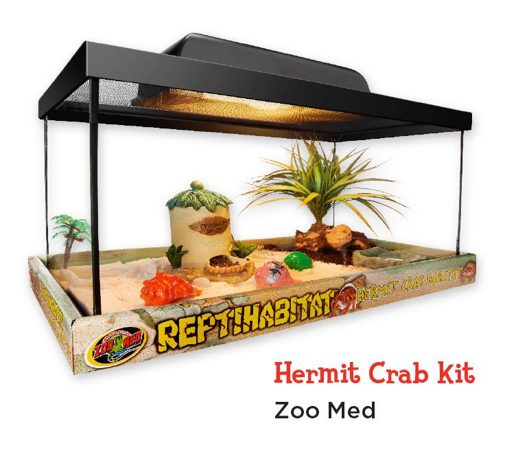 Hermit Crabs Make Great New Pets And This Kit Has Everything You Need To Provide A Comfy New Home In Store Only Hermit Crab Pet Store Pets