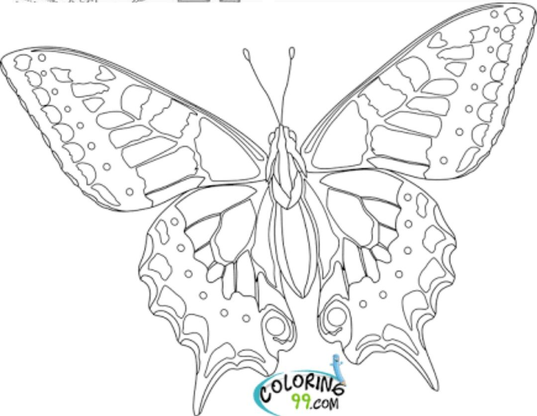 Pin By Celine Frere On Ornament Butterfly Coloring Page Coloring Pages Insect Coloring Pages [ 837 x 1080 Pixel ]