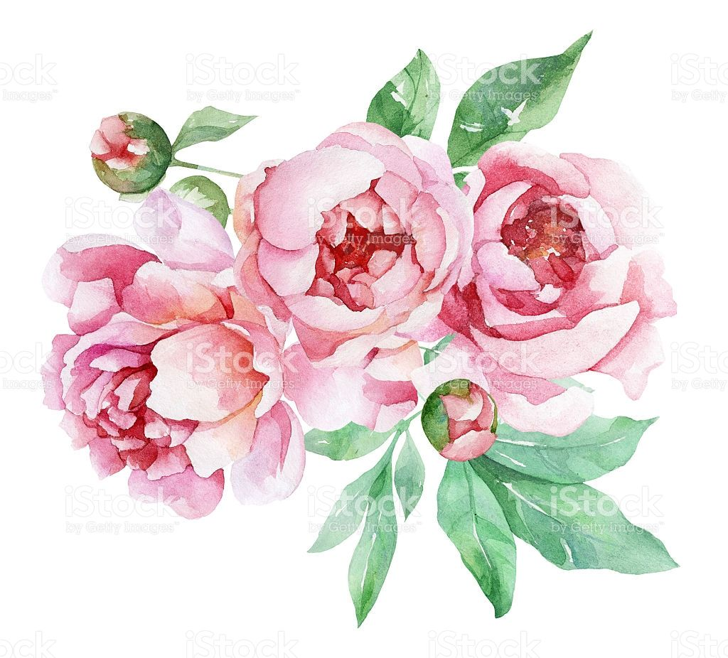 Watercolor Peonies Peony Art Floral Watercolor Peony Painting