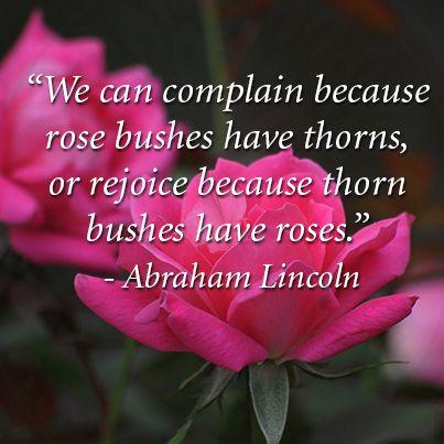 Roses Rosebush Thorns Inspiration Positivevibes Inspirational Quotes Rosebush Quotes