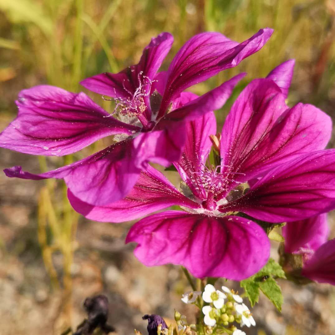 Insekten Garten Foto Fotografie Stadt Kultur Happyday Kunst Blumen Rosen Landschaft Natur Rosen Global Flowers Blumen Wiese Blumen Blumenwiese