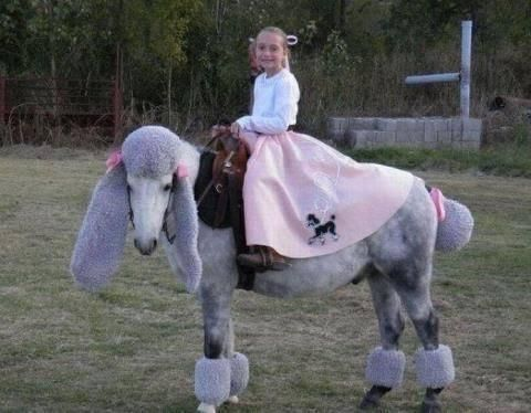 Cool Horse Rider Costume Nifty 1950 S Girl In Her Poodle Skirt Riding Her Horse Dressed As A Horse Halloween Costumes Horse Costumes Funny Horse Pictures