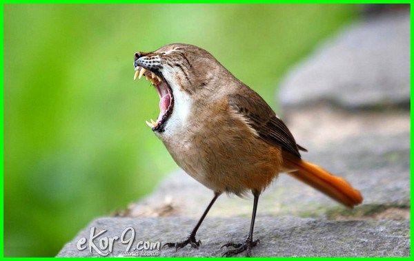 Betapa Lucunya 10 Gambar Editan Hewan Bertukar Kepala Penasaran Dunia Fauna Hewan Binatang Tumbuhan Photoshopped Animals Weird Animals Animal Mashups