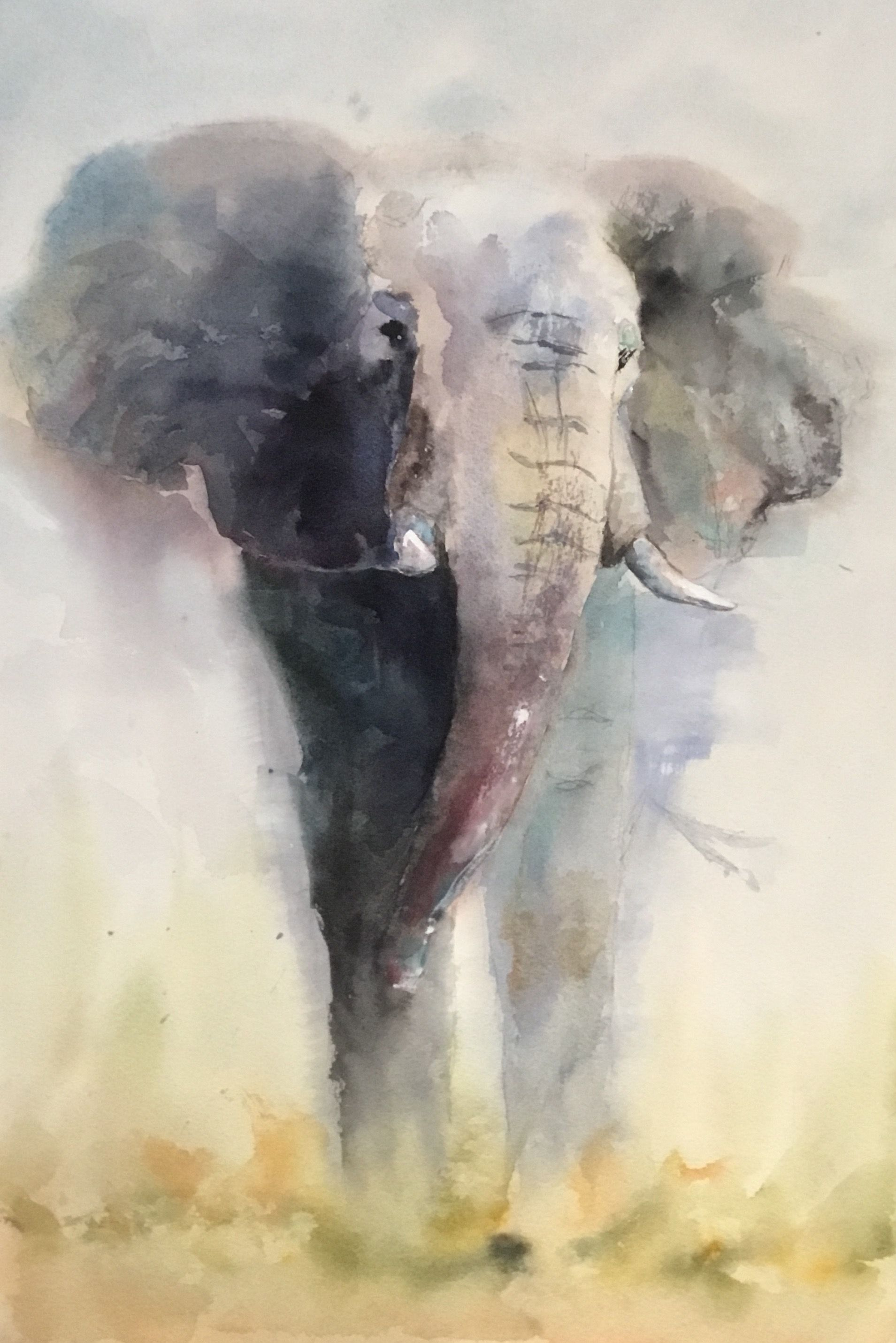 Charge Animal Drawings Art Watercolor Art Diy