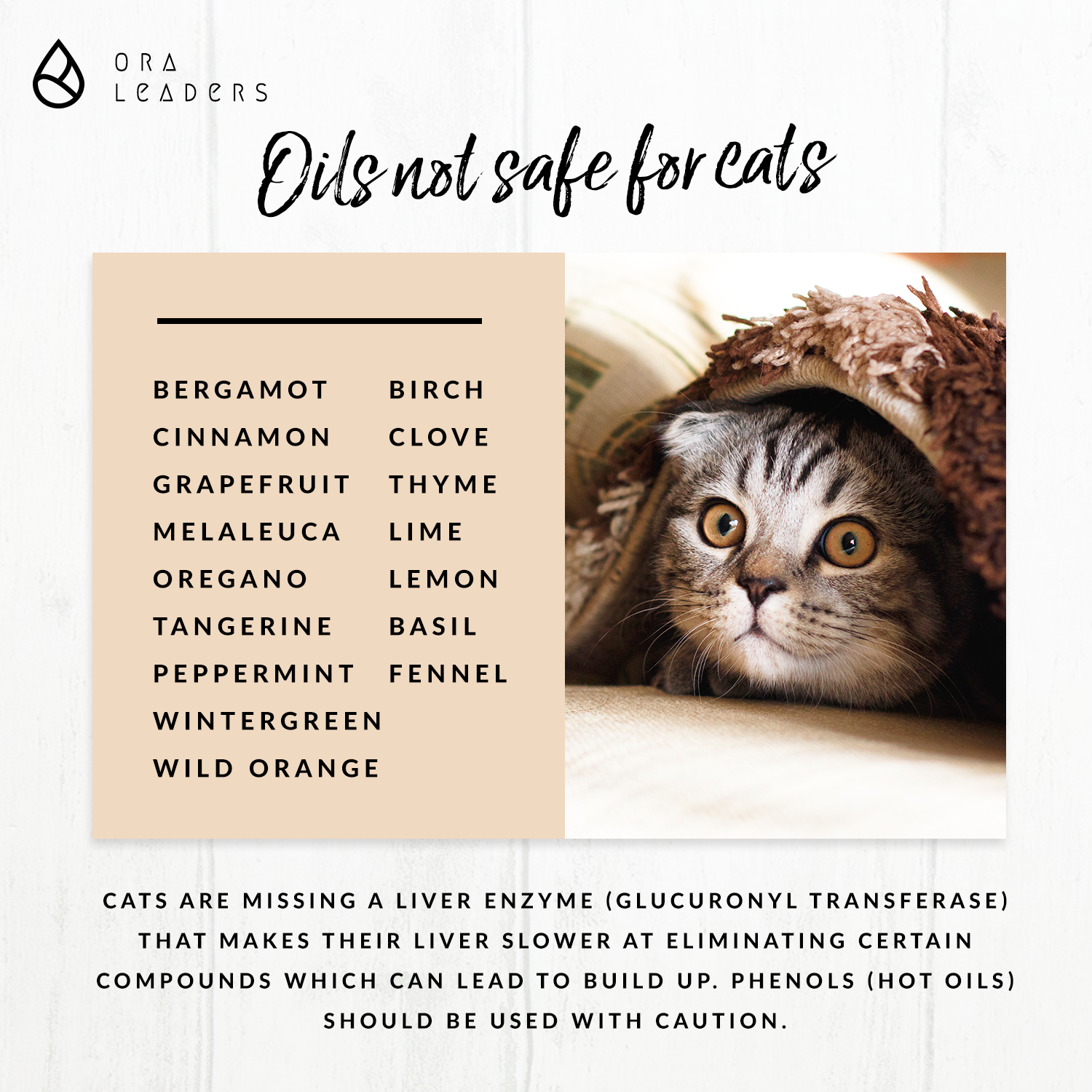 Cats and essential oils Natural ways you can use for a