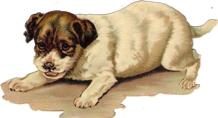 Welpen Animal books, Dog clip art, Dogs