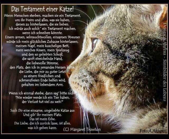 Testament 01 Jpg 640 526 Mit Bildern Spruche Katze Katzen