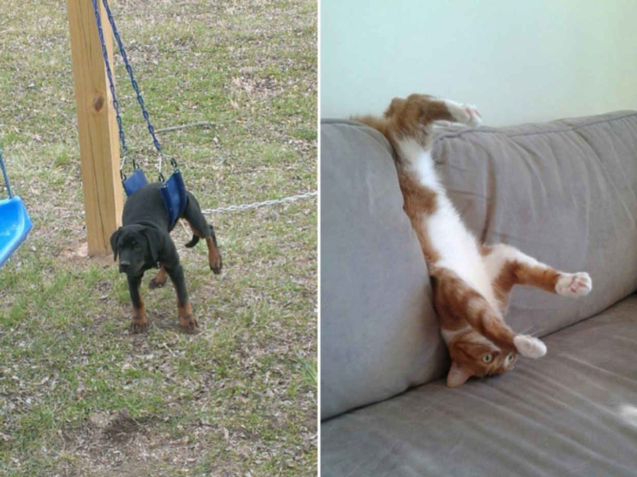 21 Pets That Are Totally Stuck and Trying to Play It Cool