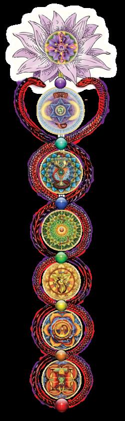 Seven Chakra Kundalini Rising   Chakra Balancing   Pinterest   Get ...