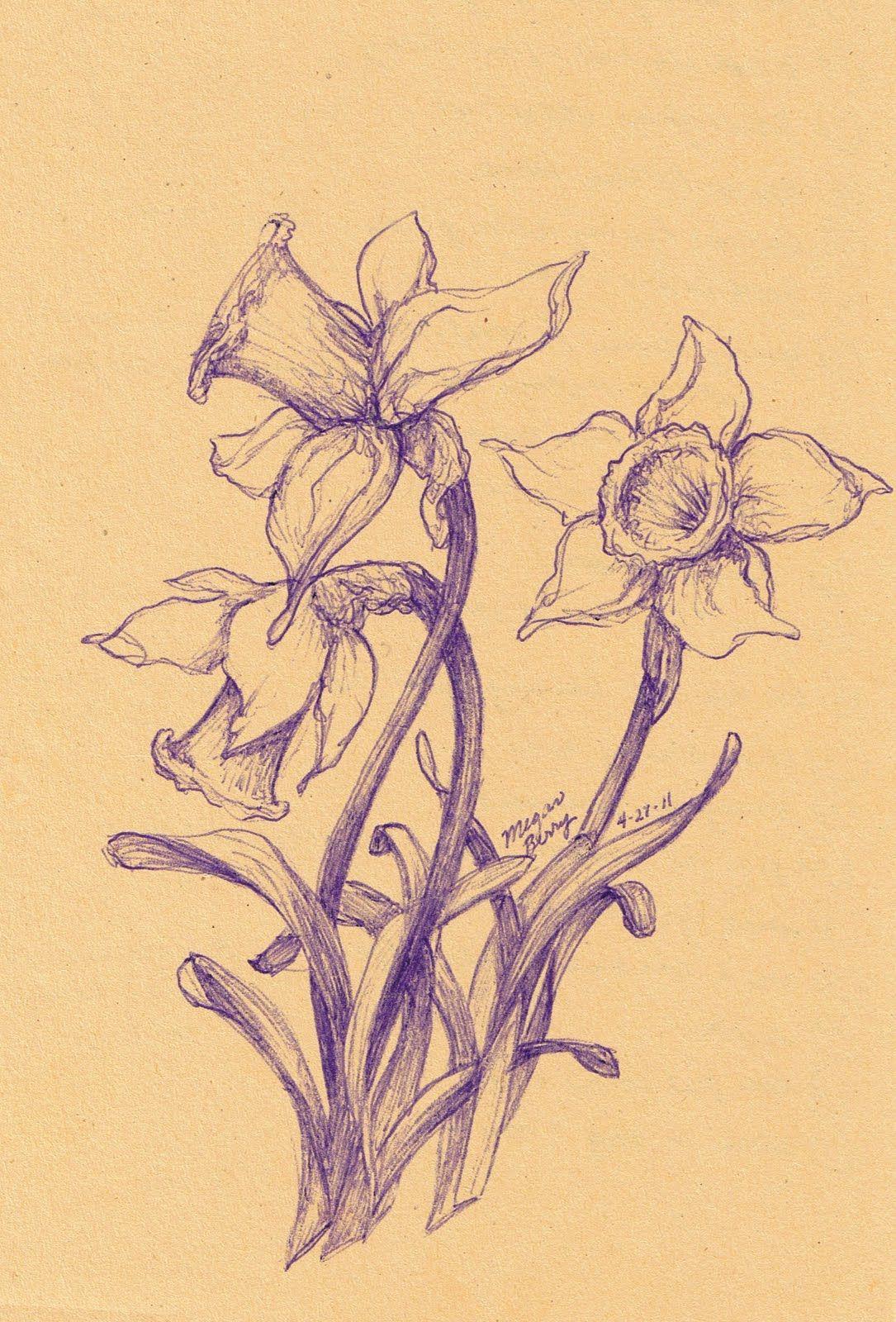 Daffodilssketchg mautheu pinterest tattoo