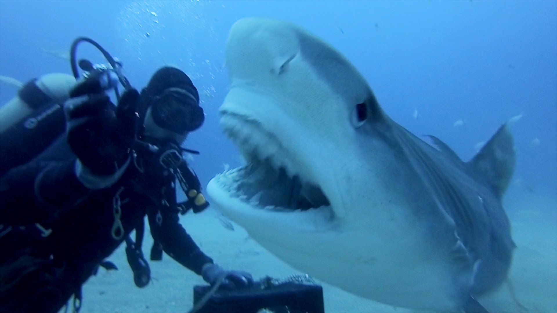 Shark Attack 03 - Music - YouTube